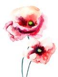 Flores coloridas de la amapola Foto de archivo libre de regalías