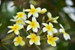 Flores coloridas de la flor amarilla en naturaleza Imagenes de archivo
