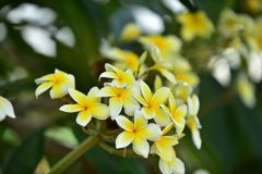 Flores coloridas de la flor amarilla en naturaleza Fotografía de archivo libre de regalías