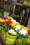 Flores coloridas de la primavera en floristería Foto de archivo