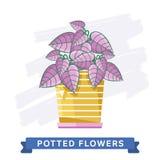 Flores coloridas de la primavera en vector de los potes Imágenes de archivo libres de regalías