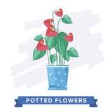 Flores coloridas de la primavera en vector de los potes Fotografía de archivo