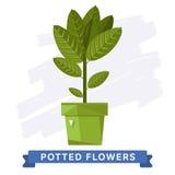 Flores coloridas de la primavera en vector de los potes Fotos de archivo