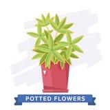 Flores coloridas de la primavera en vector de los potes Foto de archivo