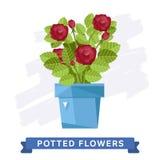 Flores coloridas de la primavera en vector de los potes Imagen de archivo