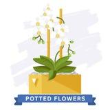 Flores coloridas de la primavera en vector de los potes Fotos de archivo libres de regalías