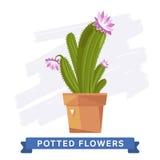 Flores coloridas de la primavera en vector de los potes Imagen de archivo libre de regalías