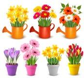 Flores coloridas de la primavera y del verano en potes ilustración del vector