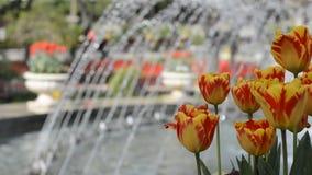 Flores coloridas de los lirios con las fuentes de agua del parque almacen de metraje de vídeo