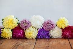 Flores coloridas del aster en fondo de madera El Callistephus chinen Imagenes de archivo