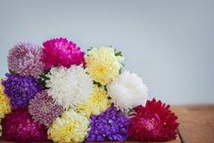 Flores coloridas del aster en fondo de madera El Callistephus chinen Imagen de archivo