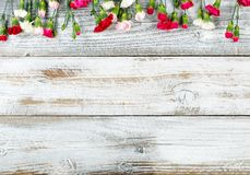 Flores coloridas del clavel que forman la frontera superior en el blanco resistido Fotos de archivo