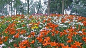Flores coloridas del lirio con los árboles Imágenes de archivo libres de regalías