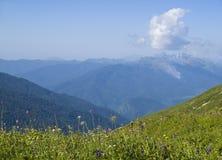 Flores coloridas del prado en montañas en primavera Imágenes de archivo libres de regalías
