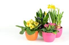 Flores coloridas del resorte Foto de archivo libre de regalías