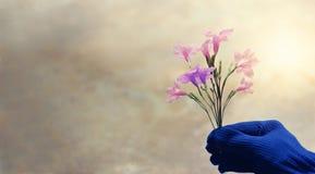 Flores coloridas del rosa y violetas en la mano del jardinero en pastel Imágenes de archivo libres de regalías