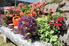 Flores coloridas del verano Imágenes de archivo libres de regalías