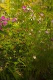Flores coloridas del verano en un día soleado Fotos de archivo libres de regalías