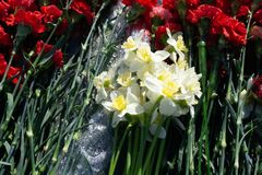 Flores coloridas do cravo na loja fotos de stock royalty free