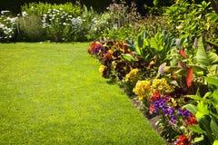 Flores coloridas do jardim fotos de stock