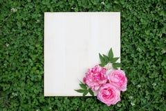 Flores coloridas do verão e placa de madeira na grama verde imagens de stock