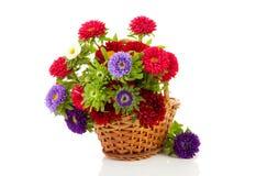 Flores coloridas dos ásteres na cesta do bastão fotos de stock royalty free