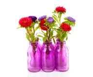 Flores coloridas dos ásteres no vaso Fotografia de Stock