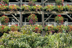 Flores coloridas em cestas de suspensão em balcões Imagens de Stock Royalty Free