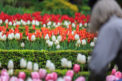 Flores coloridas em um grande jardim Fotos de Stock