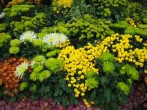 Flores coloridas em um jardim Imagem de Stock