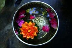 Flores coloridas em uma bacia com água fotos de stock royalty free