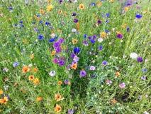 Flores coloridas en campo imagenes de archivo
