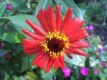 Flores coloridas en el jardín Foto de archivo