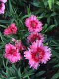 Flores coloridas en el jardín Fotografía de archivo libre de regalías