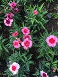 Flores coloridas en el jardín Imágenes de archivo libres de regalías