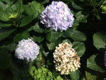 Flores coloridas en el jardín Imagen de archivo libre de regalías
