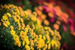 Flores coloridas en el jardín botánico fotografía de archivo libre de regalías