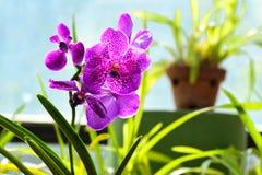 Flores coloridas en el jardín botánico real Peradeniya, Sri Lanka Fotos de archivo