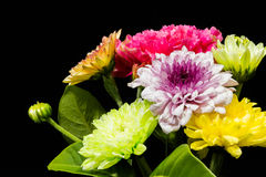 Flores coloridas en fondo negro foto de archivo libre de regalías