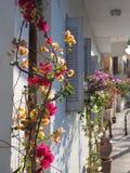 Flores coloridas en frente de la casa en Creta fotos de archivo
