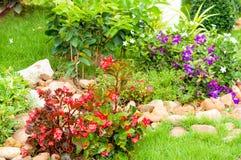 Flores coloridas en jardín Foto de archivo libre de regalías
