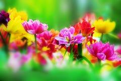 Flores coloridas en jardín del resorte Foto de archivo libre de regalías