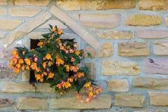 Flores coloridas en lugar de la pared de ladrillos de piedra amarilla imagenes de archivo