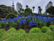 Flores coloridas en oído hablar la ciudad Fotografía de archivo