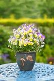 Flores coloridas en pensamientos de un pote Foto de archivo libre de regalías