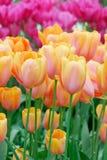 Flores coloridas en resorte foto de archivo libre de regalías