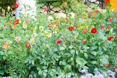 Flores coloridas en un césped del verano foto de archivo