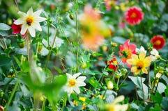 Flores coloridas en un césped del verano imagenes de archivo