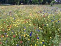 Flores coloridas en un campo verde Fotos de archivo libres de regalías