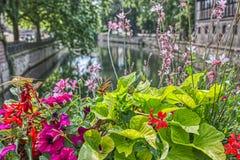 Flores coloridas en un canal en Estrasburgo foto de archivo